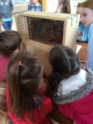 Looking at demonstration hive